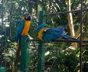 Parrots at the terminal - they have a nice aviary and some monkeys too!